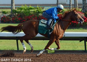 Cal Chrome by Gary Tasich 2014 workout smaller